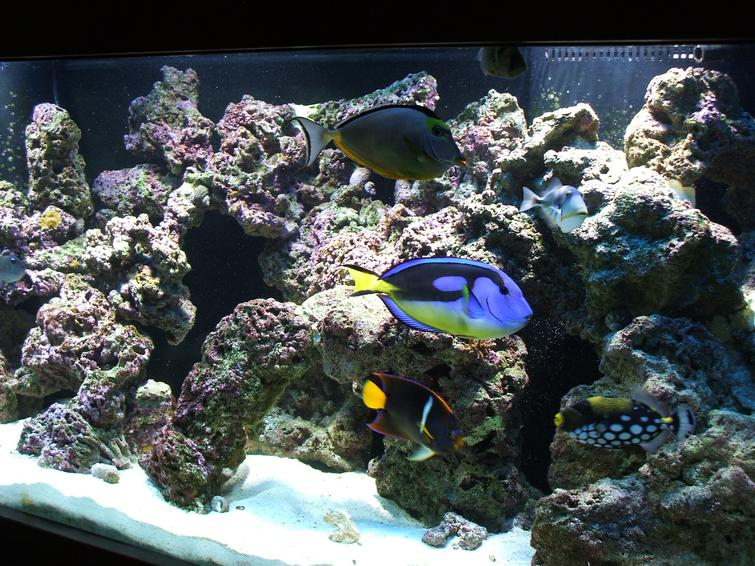 how to clean out a saltwater fish tank