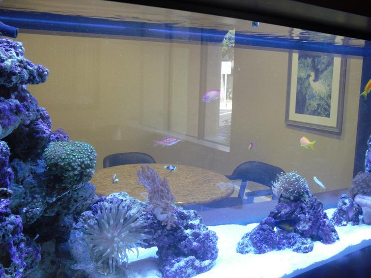 Professional aquarium pictures fish tank cleaning for Fish tank cleaning service near me
