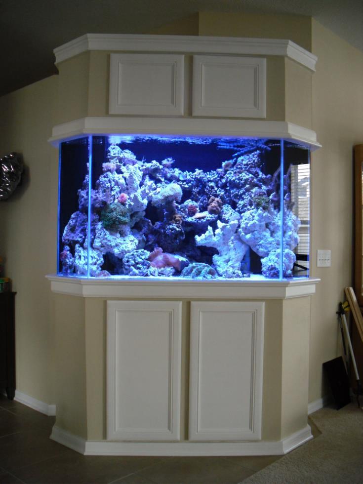 Fish tanks for sale tampa fl creative aquariums of tampa for Custom fish tanks
