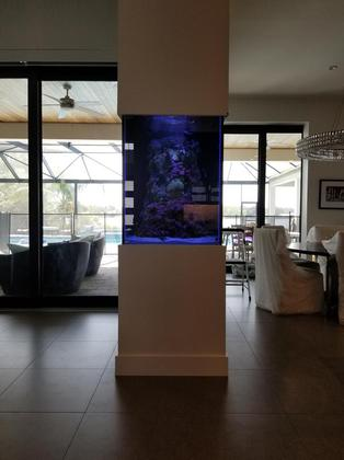 Custom Aquarium process Tampa fl