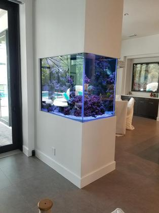 Custom Aquarium before Tampa FL