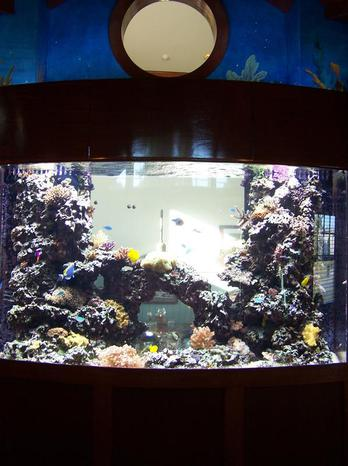 building custom fish tank tampa