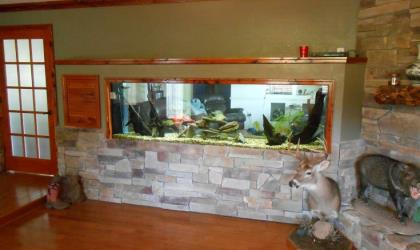 Man Cave With Tank : Custom aquariums and fish tanks installed in tampa florida