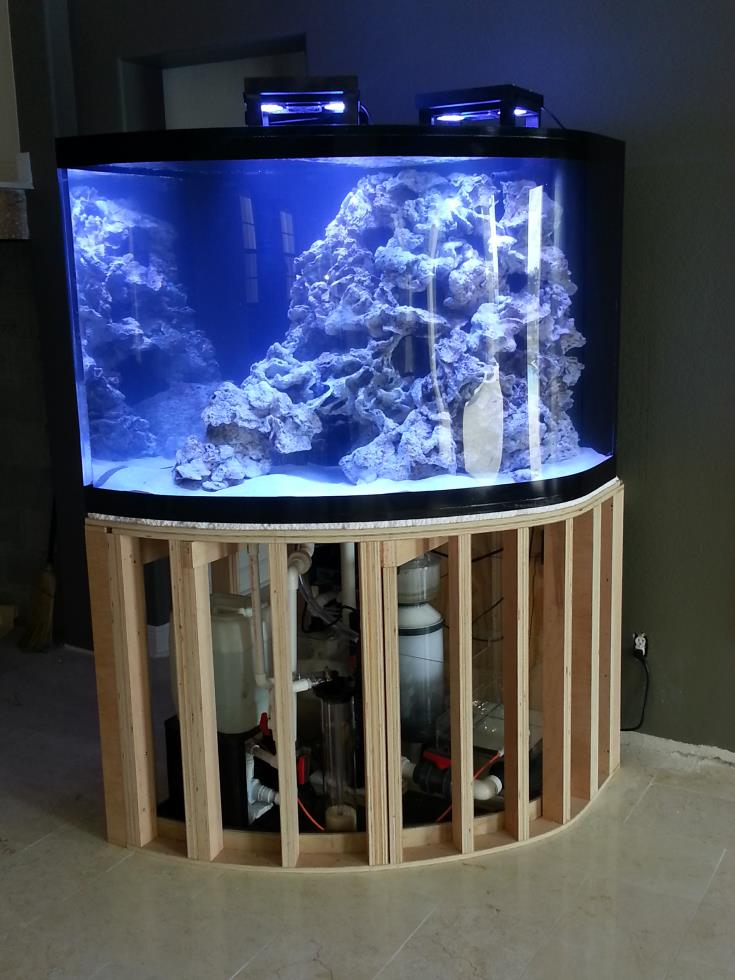 Fish tanks for sale tampa fl creative aquariums of tampa for Fish tank service