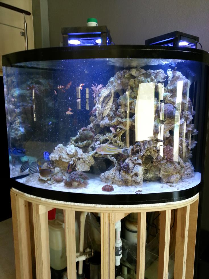 Fish tanks for sale in durban foot fish tanked aquariums for Aquariums for sale near me